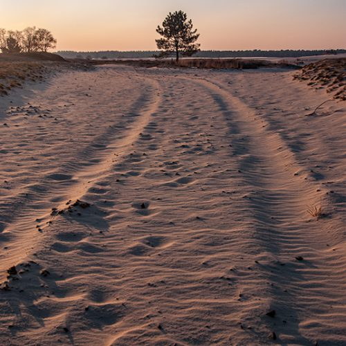 bevroren, bjornmassuger.nl, boom, brush, camera, discover holland, dunes, heide, ijs, koud, landscape, landschap, loonse en drunense duinen, sunset, tree, wind, winter, zandverstuiving, zonsondergang
